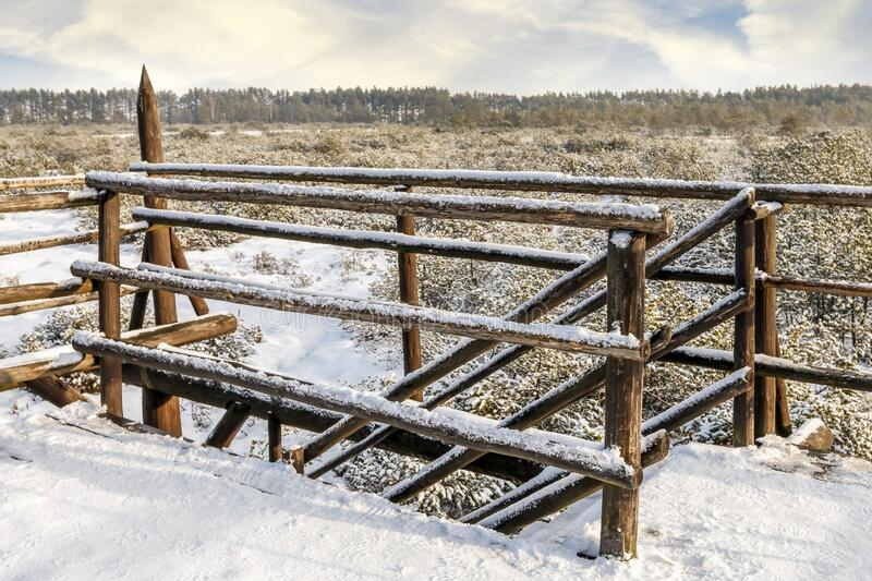 Winter forest. Wooden bridge over the swamp stock photo