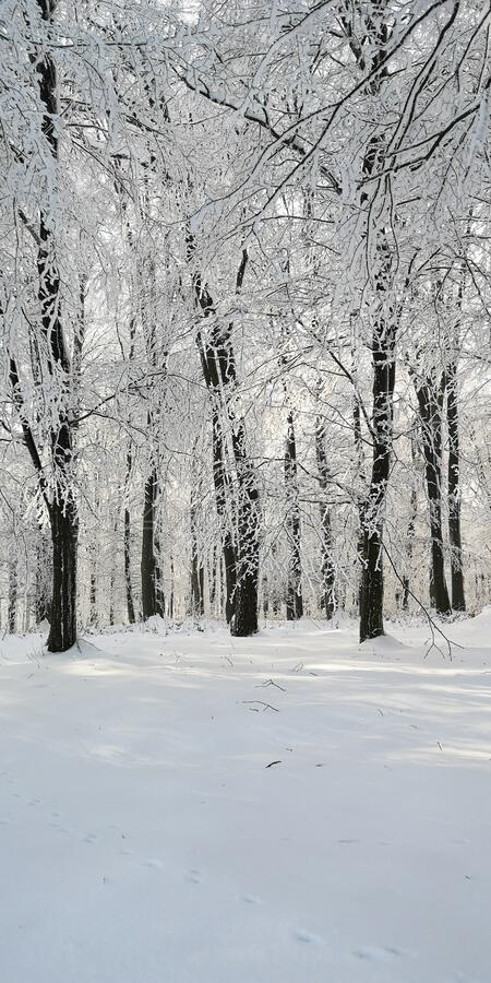 Winter frame in daytime royalty free stock photo
