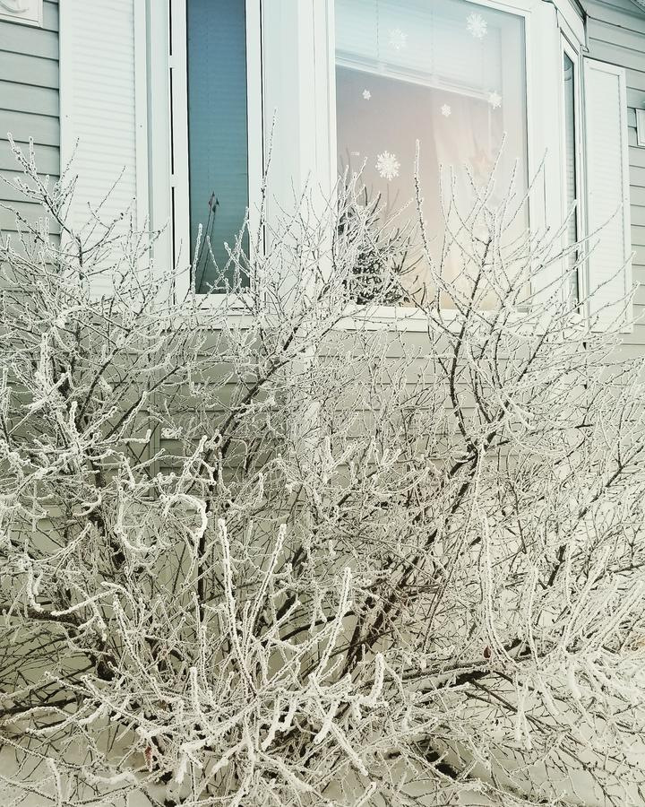 Winter Frost. In Alberta royalty free stock photos