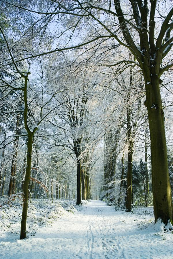 Winter frost  Forest Tudor Brugge royalty free stock photos
