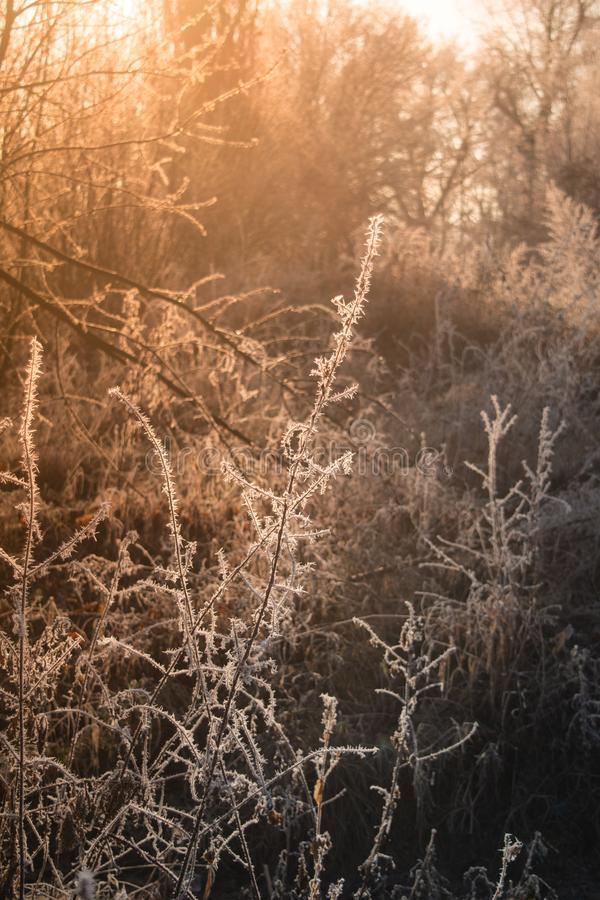 Winter Frost on grass. Early morning frost on grass stock photos