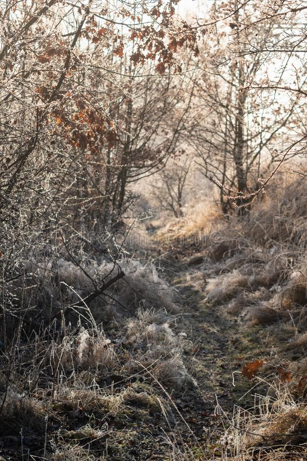 Winter Frost on grass. Early morning frost on grass and trees royalty free stock photos