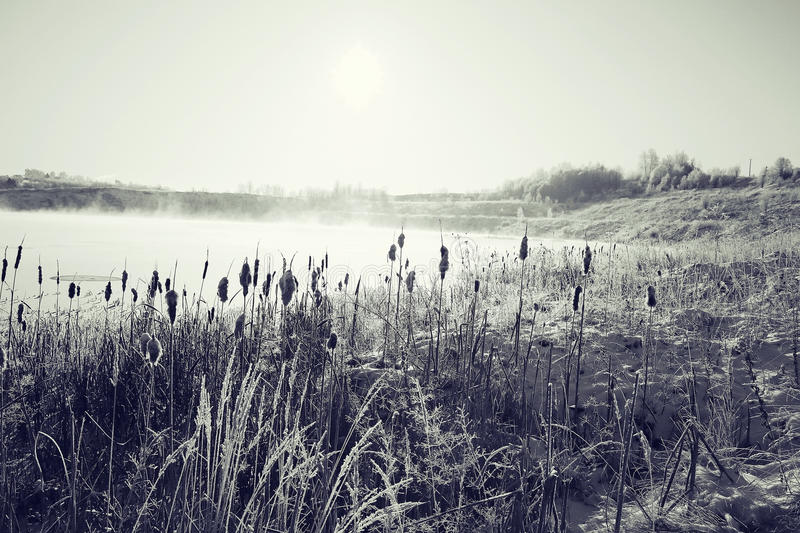 Winter frost grass stock photo. Image of nature, light ...