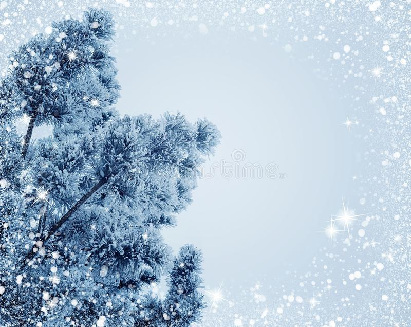 Winter, Frost, Sky, Branch royalty free stock photography