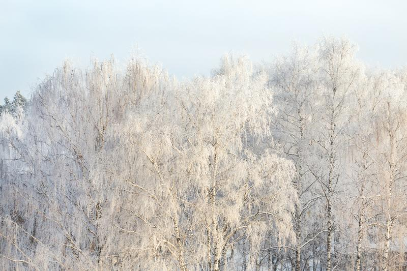 Winter frost on tree branches full frame pure winter background.  stock photo