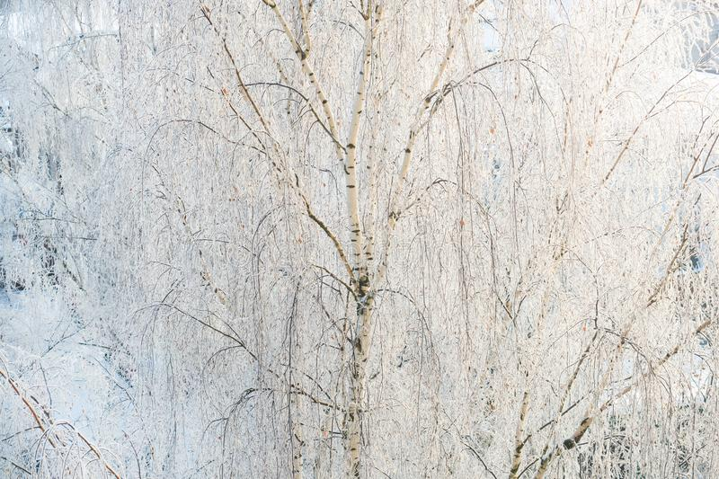 Winter frost on tree branches full frame pure winter background.  stock images