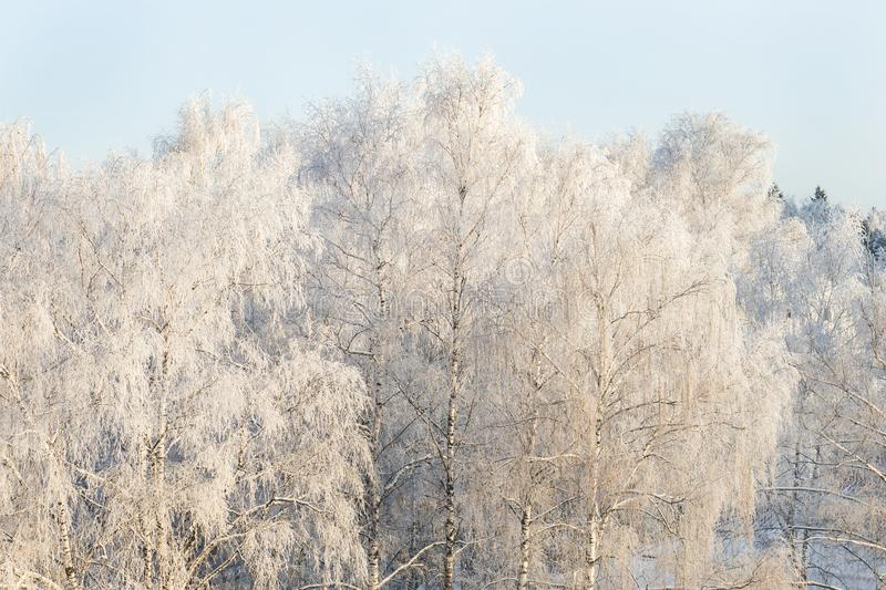 Winter frost on tree branches full frame pure winter background.  stock image