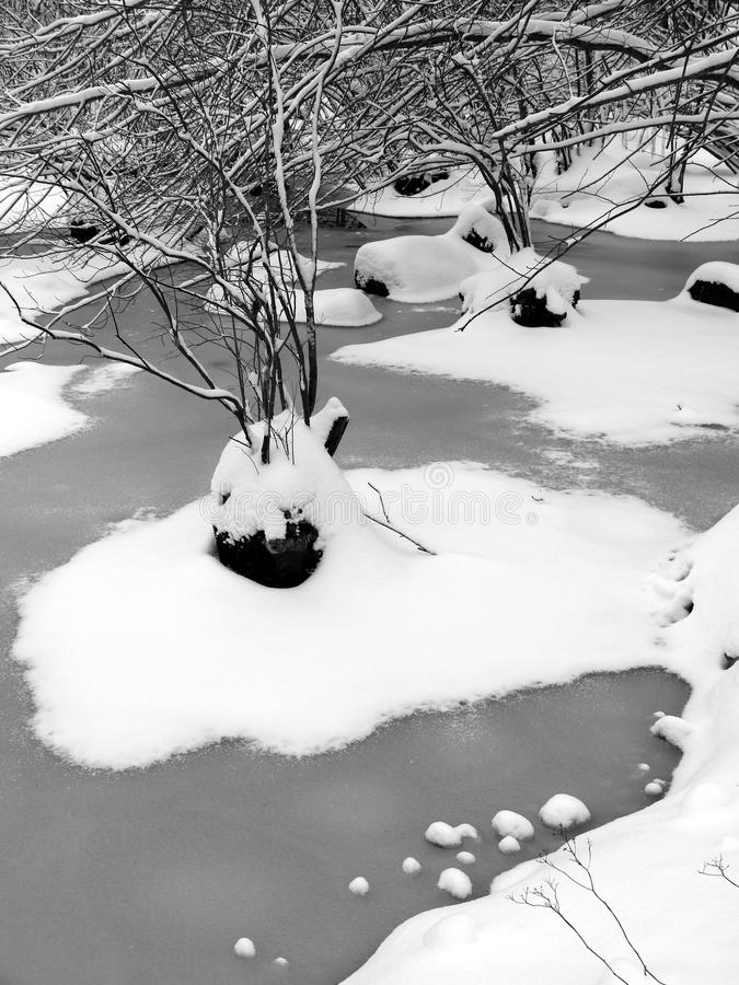 Winter: Frozen Pond With Tree Islands Royalty Free Stock Images