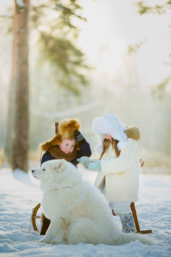 Winter children portrait with samoyed dog stock images