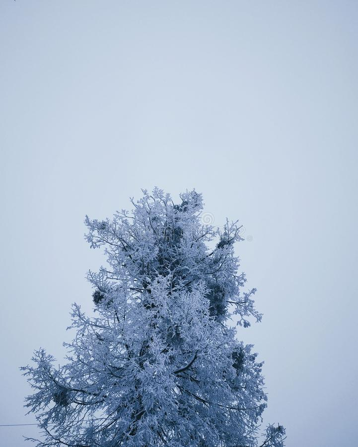 Winter got colder. Tree fully covered in snow, edited with VSCO royalty free stock images