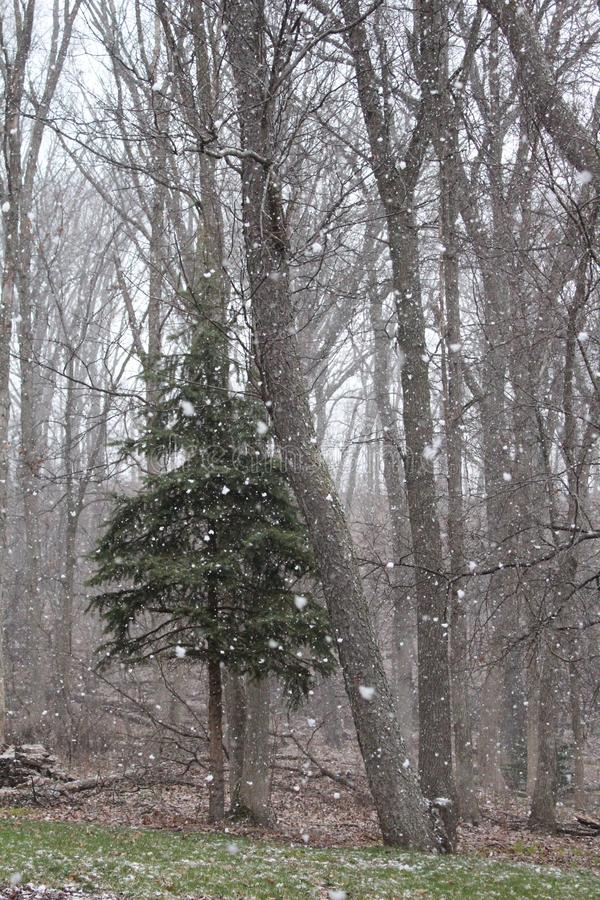 Winter-Grün-Schneeflocken lizenzfreies stockfoto