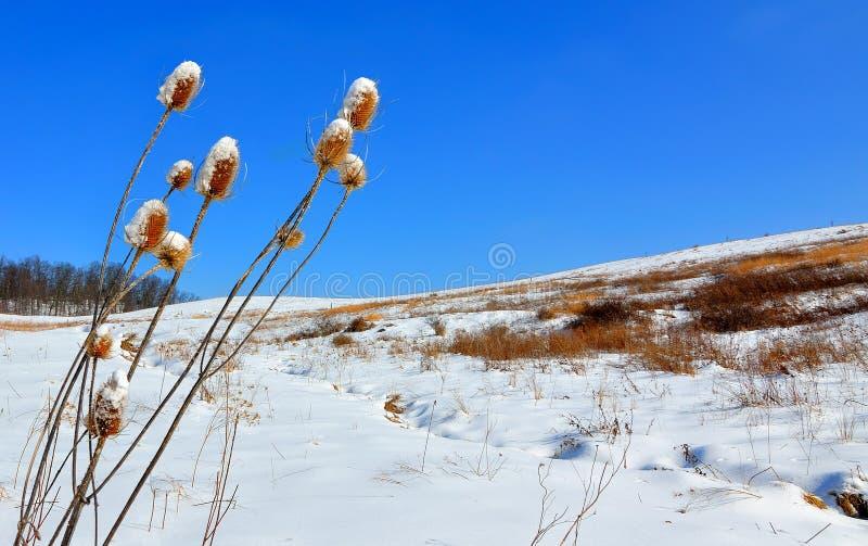 Winter-Grasland lizenzfreie stockfotografie
