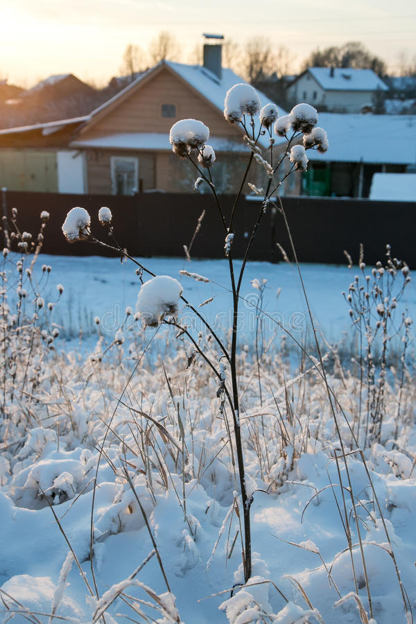Winter grass covered with snow and wooden house on the background royalty free stock photo