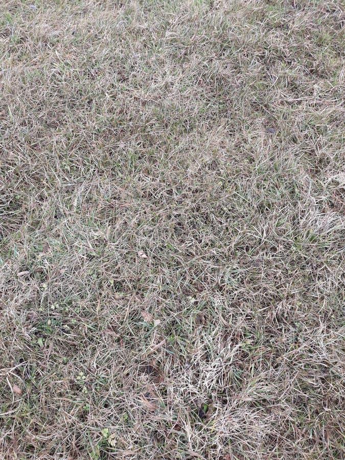 Winter Grass royalty free stock photos