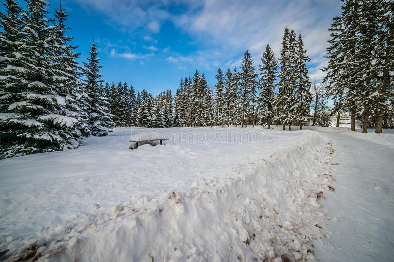 A winter hike through Edworthy Park royalty free stock images