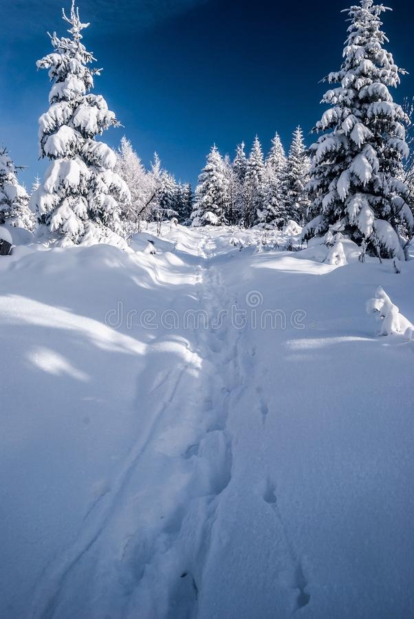 Winter hiking trail with trees around, snow and blue sky in Beskids mountains. Near Bily kriz on czech - slovakian borders royalty free stock images