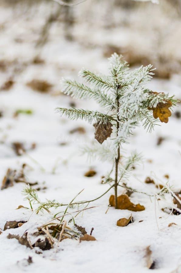 Bildergebnis für bilder Weihnachten Wald