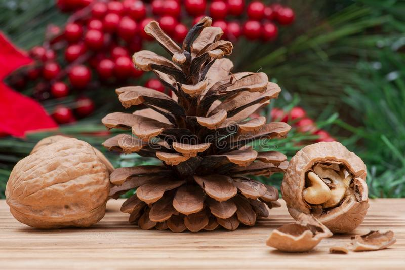 Winter holiday decoration: Blooming Red Poinsettia, Pine, Berry bush, cone and walnuts on wood. En background stock images