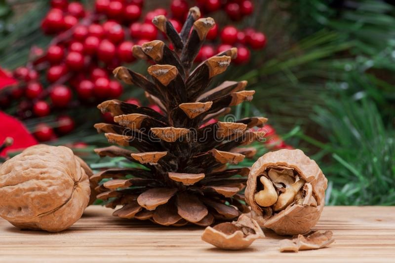 Winter holiday decoration: Blooming Red Poinsettia, Pine, Berry bush, cone and walnuts on wood. En background royalty free stock photo