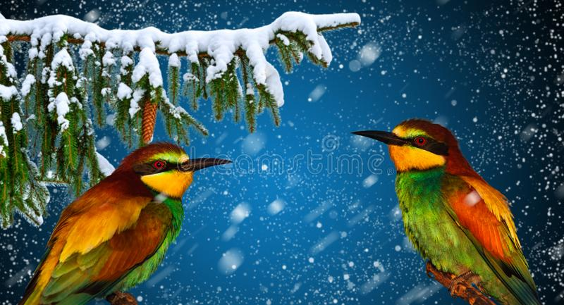 Winter holiday greeting card with two cheerful bird stock photography
