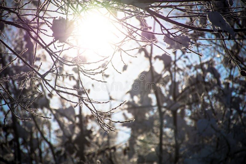 Winter-Holz auf Sunny Day lizenzfreie stockfotografie