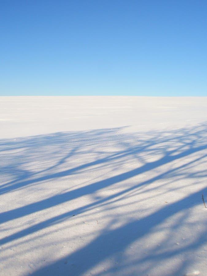 Winter horizon background trees shadows royalty free stock photos