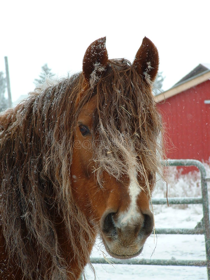 Download Winter horse stock photo. Image of horse, looking, close - 24926