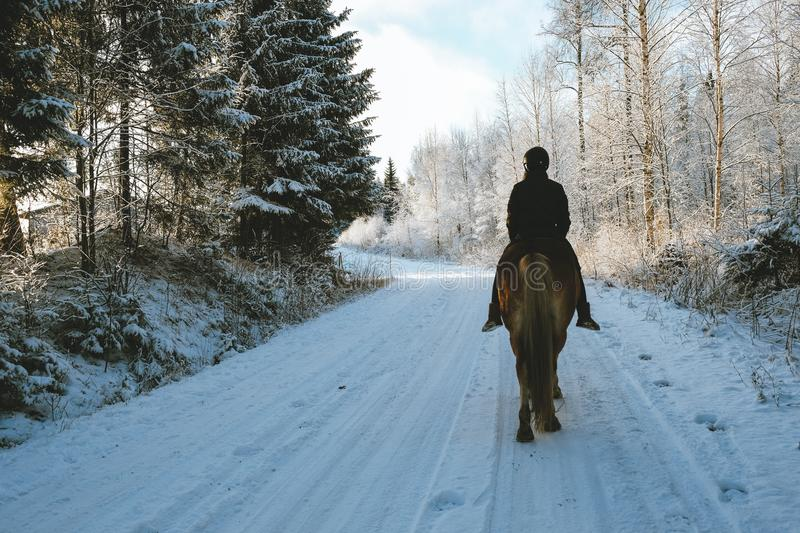 Winter horse riding stock photography