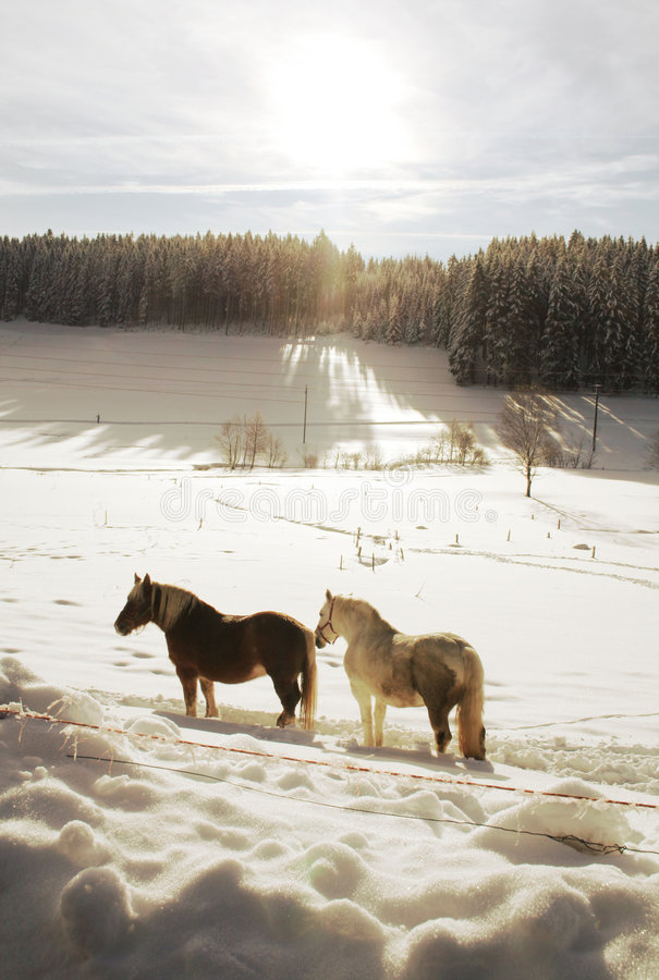 Download Winter Horses stock image. Image of pony, christmas, horse - 7389305