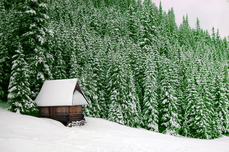 Download Winter house stock photo. Image of hoarfrost, green, dull - 11407322