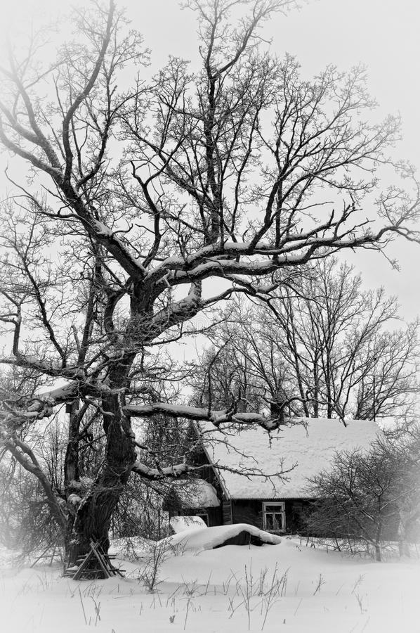 Winter house royalty free stock image