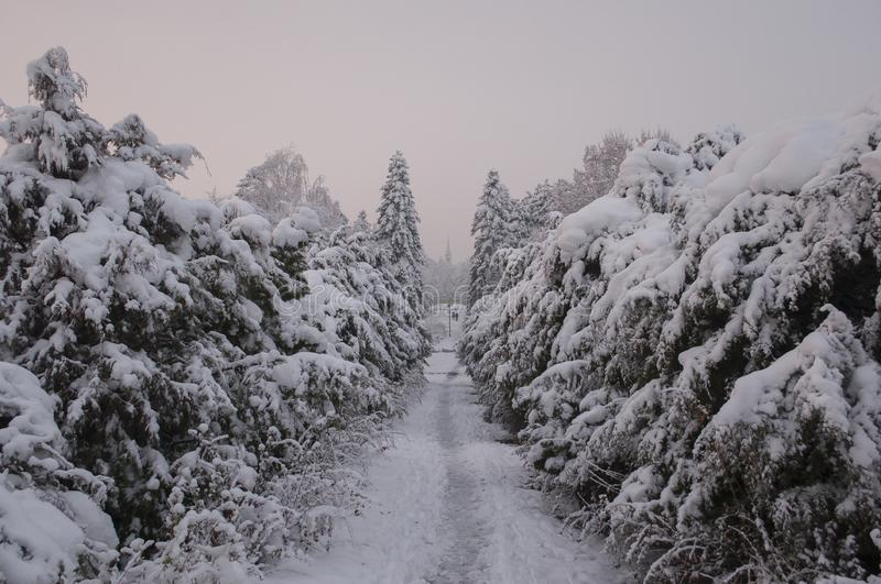 Winter in a huge park with a trees covered with snow. And with a lot of snow all around.path thru the park leads to the small town center with cathedral .in royalty free stock photos