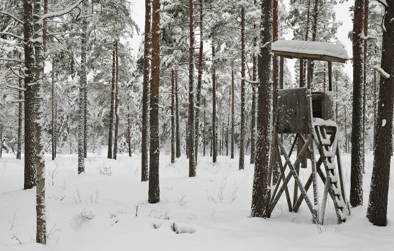 Download Winter hunting stock photo. Image of ladder, scandinavia - 17888382