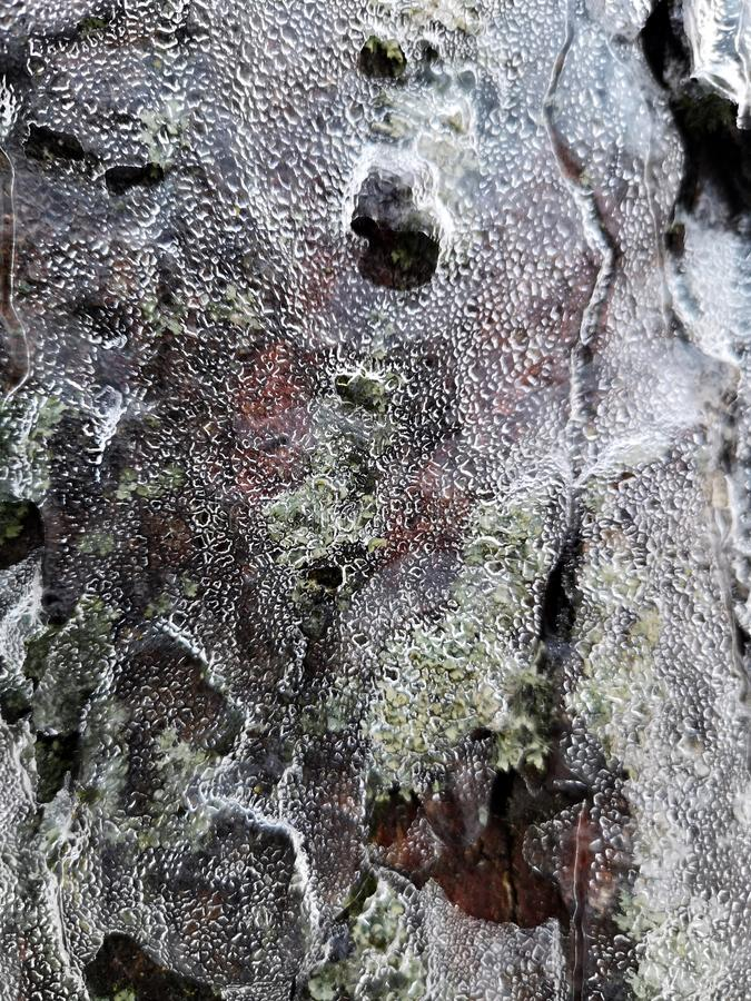 Winter ice storm - The trees bark is covered with ice. royalty free stock photo
