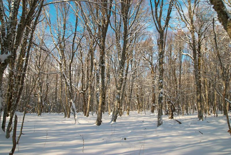 Download Winter icy forest stock image. Image of beauty, chill - 11464171
