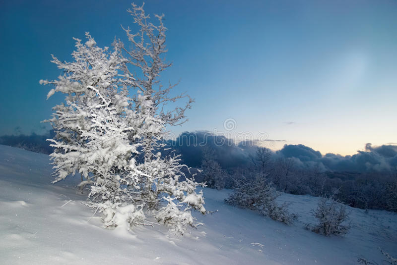 Download Winter icy forest stock image. Image of color, night - 11464239