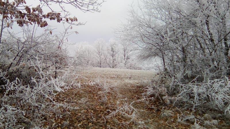 Winter idyll royalty free stock photo