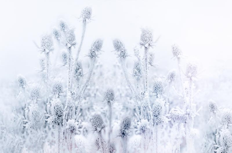 Winter idyll, morning fog and frozen thistle, burdock in the field royalty free stock images