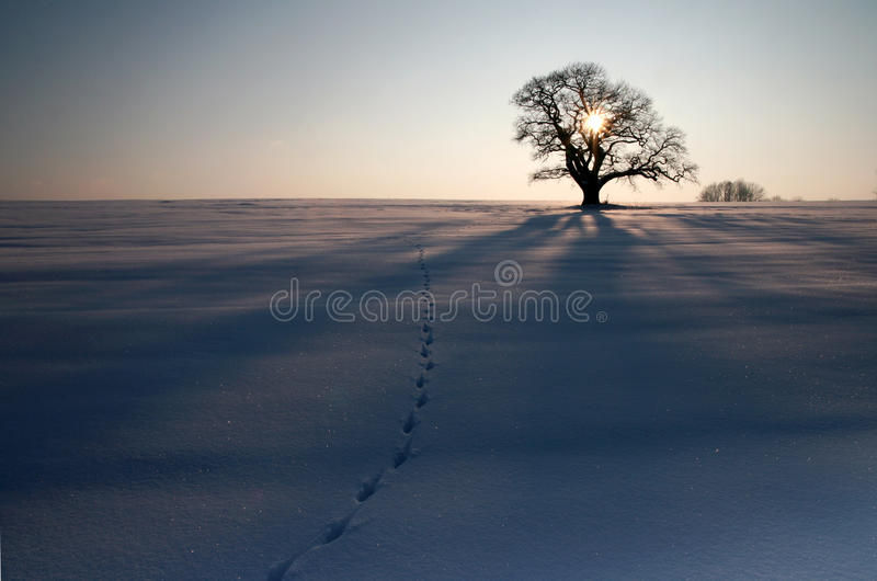 Winter III royalty free stock images