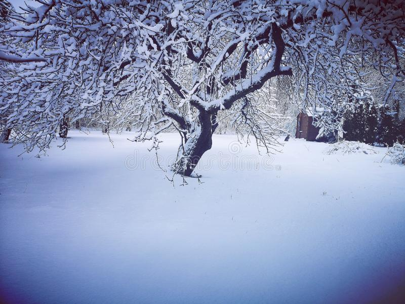 Winter im alten Garten stockfotografie