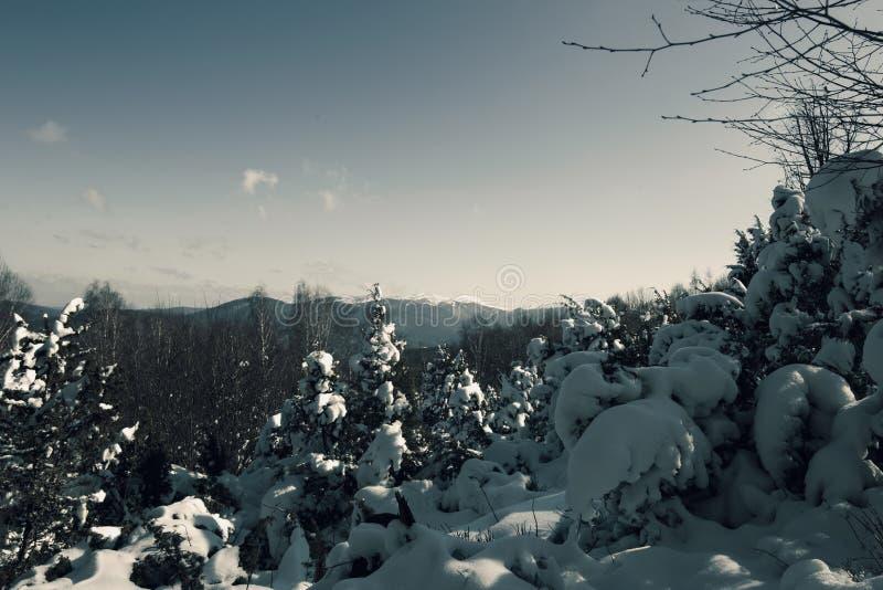 Winter im Berg lizenzfreie stockbilder