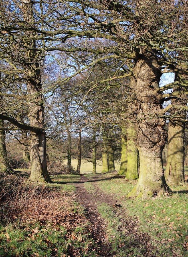 Winter im englischen Waldland lizenzfreies stockfoto