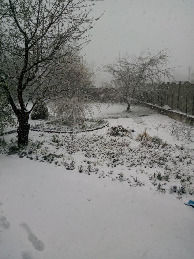 Winter im Garten stockfoto