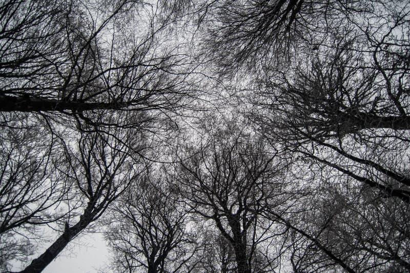 Winter im Holz lizenzfreies stockfoto