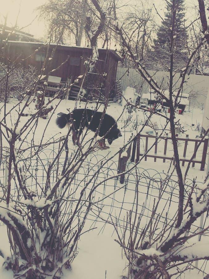 Winter im Land lizenzfreies stockfoto
