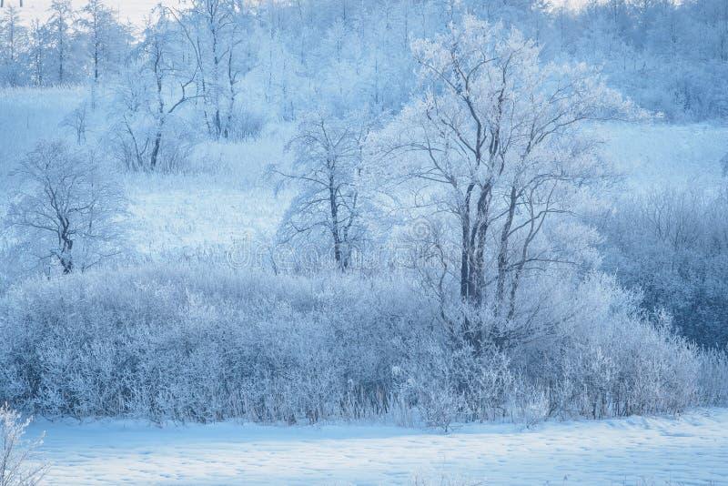 Winter im Landschaftsschutzgebiet Schwemm in Walchsee Tirol stockfoto