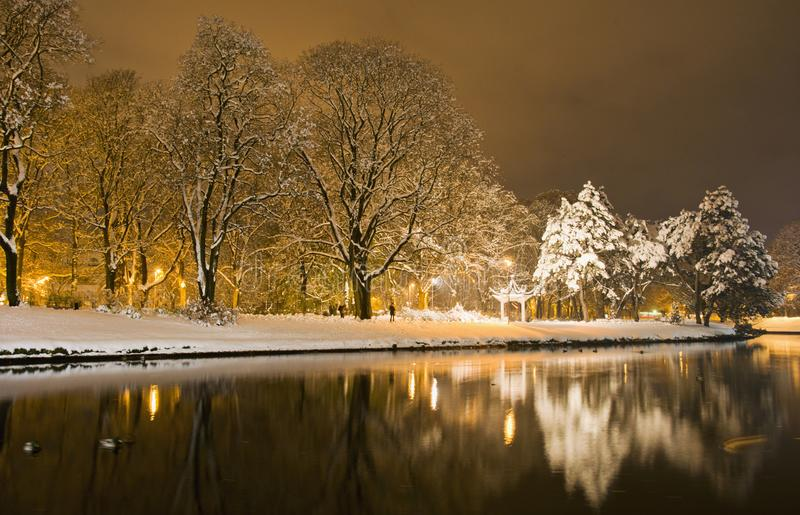 Winter im Park in der Nacht lizenzfreie stockfotografie