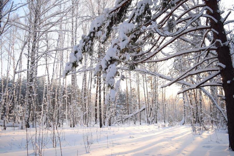 Winter im Russland schnee stockfotos