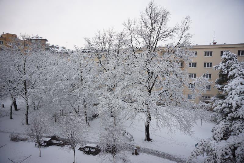 Winter im Stadtpark mit den Baumasten umfasst mit Schnee lizenzfreies stockfoto