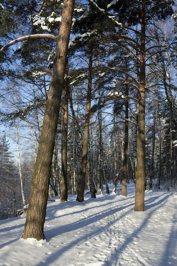 Winter im Wald, lange Dunkelheiten lizenzfreies stockbild